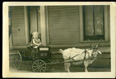 vintage goat cart photos | Happy Baby in Goat Cart Antique Real Photo by veraviola on Etsy