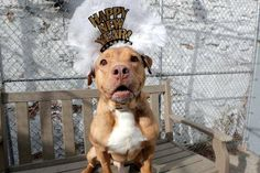 JACK - A1097806 - - Manhattan  Please Share:TO BE DESTROYED 01/03/17  A volunteer writes: I'm the self proclaimed President of Jack's fan club, but am willing to relinquish my title (without a vote recount) to his new mom or dad. Current club members include staff and volunteers who have spent time with and been hugged by this adorable redhead, but once you are President you'll have your own cabinet (I mean club). So happy to make a friend with a leash and