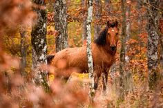 Seasonality - Autumn Horse