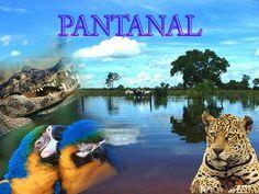 Resultado de imagem para bioma pantanal