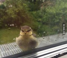 look at this it thinks that i made it rain really angry bird