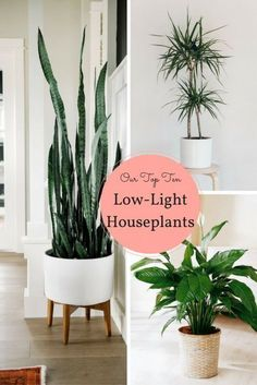 10 Houseplants That Don't Need Sunlight - Leedy Interiors #houseplantslowlight