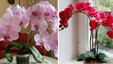Nápady a Tipy House Plants, Orchids, Home And Garden, Gardening, Classic, Flowers, Derby, Indoor House Plants, Lawn And Garden