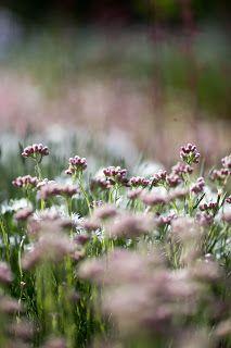 Eripurasten Rauhala: Herkkiä kukkijoita