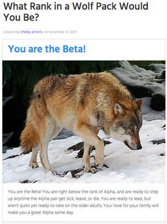 I got beta what will you get?