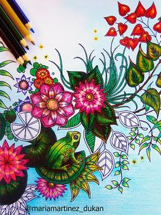 Jardin Secreto libro Johanna Basford - secret garden - enchanted forest - coloring gallery