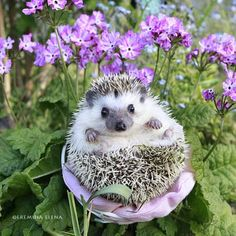 summer by Elena Eremina Super Cute Animals, Cute Little Animals, Cute Funny Animals, Fluffy Animals, Animals And Pets, Baby Hedgehog, Garden Animals, Cute Animal Pictures, Animal Memes
