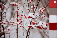 Zimowa paleta kolorów wygenerowana ze zdjęcia - inspiracje zimowe, do wnętrza, na blog, projektowanie, design, rękodzieło, decoupage, scrapbooking.