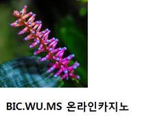 온라인카지노 #온라인카지노 ↔ ( http://bic.wu.ms) 윤형주 온라인카지노 조현아