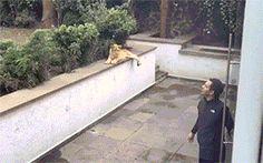 Animal Lovers - Comunidade - Google+