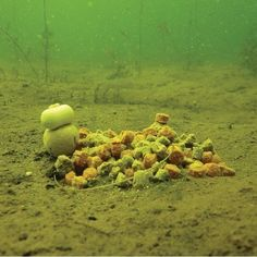 Rob Hughes investigates spring fishing: Part five - Articles - CARPology Magazine
