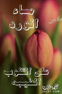 Arabic Quotes, Islamic Quotes, Good Evening Greetings, Evening Pictures, Good Morning Images Flowers, Good Night Blessings, Good Afternoon, Cute Cartoon Wallpapers, English Quotes
