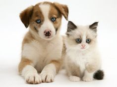 Dogs vs Cats! - The Ultimate Poll!