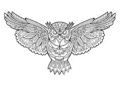 Owl Coloring Book For Adults Vector Bird Illustration Anti Stress Adult Black And White Lines