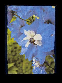 Aurora Blue Delphinium  Photo Block  by SideStoriesStudios on Etsy