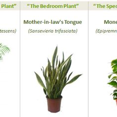 These three plants can clean up 87% of indoor air pollutants in 24 hours.