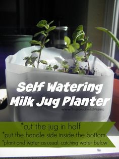 5 Ways to Recycle a Milk Jug in the Garden The simple milk jug can be a workhorse in the garden. Try these five frugal tips to recycle a milk jug in garden areas through out your property. Self Watering Containers, Self Watering Planter, Diy Planters, Garden Planters, Glass Garden, Milk Jug Crafts, Lush, Recycled Garden, Ways To Recycle