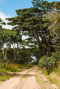 Forest track through Miombo Woodlands in Kundelungu National Park, DRC, Katanga Province, Congo, Central Afirca