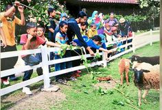 #goatvet says while this photo is of sheep, there are others of goats on this Malaysian farm