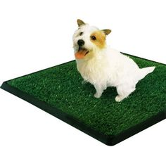 "PetZoom Pet Park Indoor Pet Potty 25.5"" x 20"" x 2""  http://www.amazon.com/PetZoom-Park-Indoor-Potty-25-5/dp/B002ZHRTAK/?tag=httpbetteraff-20"