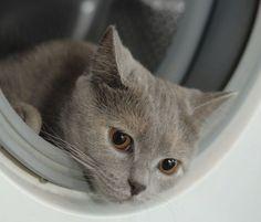 gattino in lavatrice   cat in washing machine