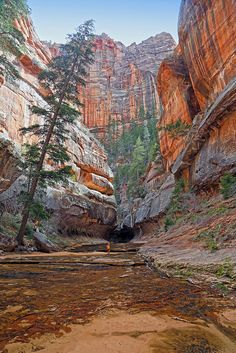 Zion National Park, Left Fork Canyon
