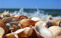 Beach Shells Wallpaper - Bing Images