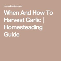 When And How To Harvest Garlic | Homesteading Guide
