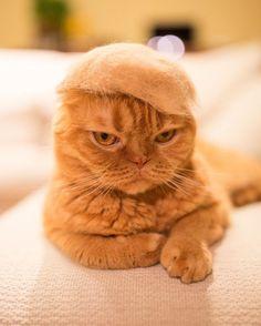 Cochete si haioase: Pisici cu palarii blanoase