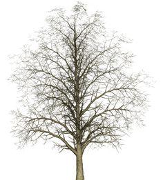 Tree 나무자료