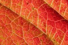 Textures in nature - leaves
