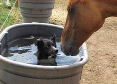 """Horse: """"Why are you swimming in my bowl?"""" Dog: """"why are YOU drinking from my pool??"""""""