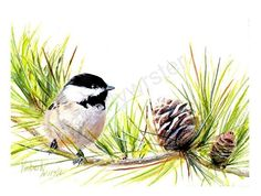 Christmas Chickadee  (Black-capped Chickadee) by Kimberly Wurster Watercolor ~ 9 x 11
