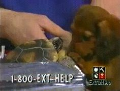 Turtle Fighting Back
