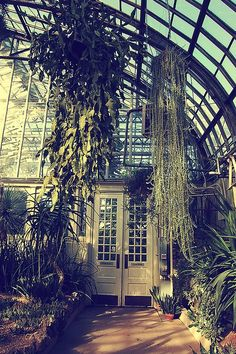 Greenhouses and libraries induce a hypnotic soul-stilling sense of peace in me.