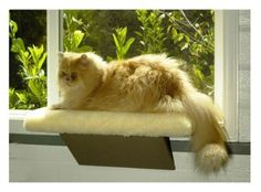 Casual Pet Products Kitty Window Perch * Check this awesome product by going to the link at the image. (This is an affiliate link) Cat Window Perch, Cat Perch, Window Sill, Cat Lover Gifts, Cat Lovers, Cat Tree Condo, Cat Hammock, Thing 1, Cat Sleeping