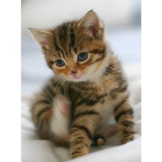 The Daily Kitten - Daisy - April 07, 2009 ❤ liked on Polyvore