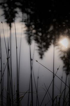 soleildansétang by Isabelle Cerf worsham on 500px