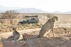 Self Drive Safari offer the best way to experience Africa's wildlife as Enrico's Tours & Safaris help you to arrange your self drive safari in top African destinations. Best Bucket List, South Africa Safari, Thing 1, Forest Service, Travel Deals, Travel List, Travel Info, Travel Destinations, African Safari