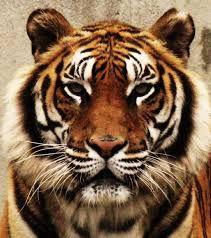 tiger japanese bell - Recherche Google