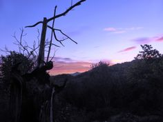 Advent Challenge 2014 – Driftwood – Advent Challenge 2014 Taken from www.resistanceandrenewal.net Advent of a New Day. pdf: rr-advent-prayer-2014.pdf This is a real challenge, Gospel based.