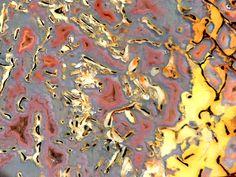 Gem dinosaur bone macro