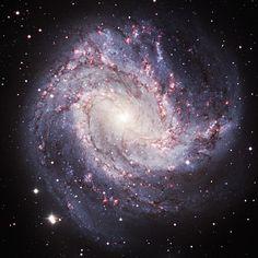 Южная вертушка - спиральная галактика с перемычкой NGC 5236 (M83) в созвездии Гидра
