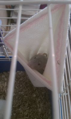 Re-purposing the kids old winter hats into small animal sleeping hammocks with only a few zip strips. In our case, for our rats.
