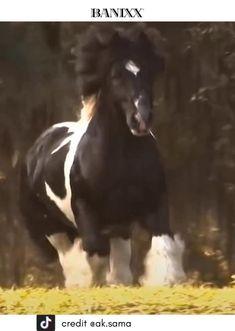 Beautiful Arabian Horses, Most Beautiful Horses, Majestic Horse, Pretty Horses, Animals Beautiful, Cute Animals, Cute Baby Horses, Big Horses, Horse Love