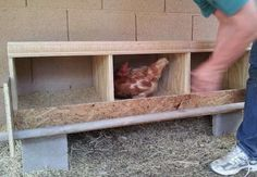 Here is a diy step by step process of building a Chicken Coop Nesting Box (Egg Laying Box). The size, variety and the location of a chicken nesting box will vary depending on your needs. Best Egg Laying Chickens, Fancy Chickens, Chickens Backyard, Raising Chickens, Backyard Ideas, Chicken Roost, Chicken Nesting Boxes, Chicken Coop Designs, Building A Chicken Coop