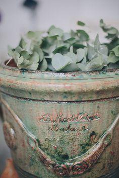 best smell ever. pottery + eucalyptus // photo by Thomas Steibl Mint Green, Olive Green, Fresh Green, Gray Garden, Sage Garden, Hortensia Hydrangea, Hydrangeas, Lilacs, L Eucalyptus