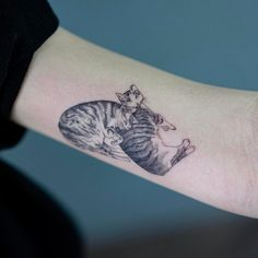 korean style cats tattoo on the arm