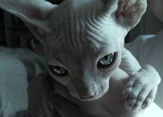 Such a cute little alien!