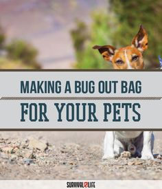Bug Out Bags for Your Beloved Pets | 72 Hour Emergency Kits, Gears And Preparedness Ideas by Survival Life at http://survivallife.com/2015/12/20/bug-out-bags-for-your-beloved-pets/